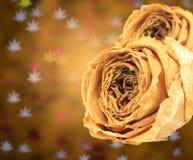 rosa asciutta doppia di bianco sul bokeh delle foglie di acero della sfuocatura Immagine Stock Libera da Diritti