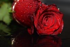 Rosa asombrosa del rojo Imagen de archivo
