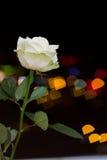 Rosa auf den Hintergrundlichtern Stockbilder