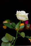 Rosa auf den Hintergrundlichtern Lizenzfreie Stockfotografie