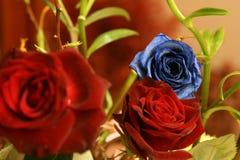 Rosa azul imagem de stock