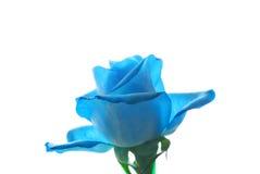 Rosa azul Imagens de Stock
