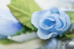 Rosa azul no álbum do casamento Fotografia de Stock