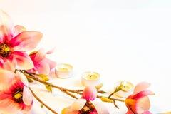 Rosa Badekurortblumen-Hintergrundrahmen Lizenzfreie Stockbilder
