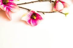 Rosa Badekurortblumen-Hintergrundrahmen Lizenzfreies Stockfoto