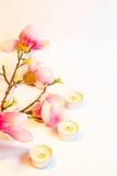 Rosa Badekurortblumen-Hintergrundrahmen Stockbilder