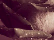 Rosa bakgrund för choklad Arkivfoto