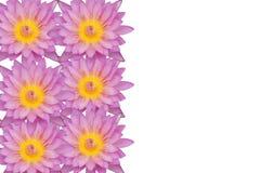 Rosa bakgrund för textur för lotusblommablommor Royaltyfria Bilder