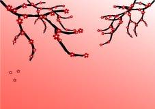 Rosa bakgrund med blomningfilialer Fotografering för Bildbyråer