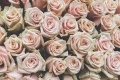Rosa bakgrunder för valentindag eller en annan beröm Royaltyfri Foto