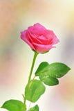 Rosa bakgrundsabstrakt begrepp (godan för konstverk, tapet och dekorativ design) Arkivbild