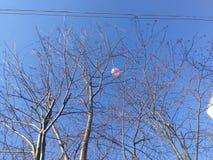 Rosa Ballon in den Niederlassungen von Bäumen, zwei Linien von elektrischen Drähten, klarer blauer Himmel stockbild
