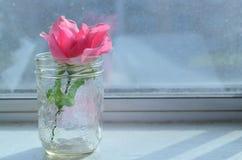 Rosa in barattolo Fotografia Stock