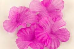 Rosa Baumwollblumenblätter Lizenzfreie Stockfotos