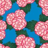 Rosa Begonia Flower, Picotee älskar först på blå bakgrund också vektor för coreldrawillustration vektor illustrationer