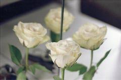 Rosa bianca con la doppia riflessione su un fondo leggero fotografie stock libere da diritti