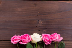Rosa, bianco e rose rosse Fotografia Stock