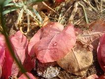 Rosa Blätter Stockfoto
