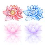 Rosa & blå lotusblomma stock illustrationer