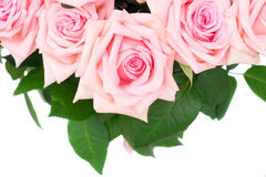 Rosa blühende Rosen Stockfoto