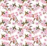 rosa fruchtapfel kirsche kirschbl te bl ht nahtlose blumenschablone aquarell auf wei em. Black Bedroom Furniture Sets. Home Design Ideas