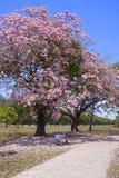 Rosa blühender Baum mit Parkbank lizenzfreies stockbild