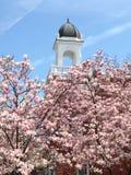 Rosa blühender Baum und Haube Lizenzfreie Stockbilder
