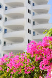 Rosa blühendes Bouganvilla auf Hintergrund des Wohnkomplexes Lizenzfreies Stockfoto