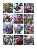 Rosa blüht Collage Lizenzfreie Stockfotos