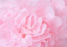 Rosa blüht Hintergrund _1 Makro der rosa Blumenblattbeschaffenheit Weiches träumerisches Bild Flacher DOF stockbilder