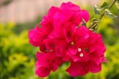 Rosa Blüte Stockbild
