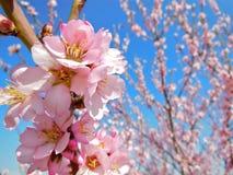 Rosa Blüten-Gruppe Lizenzfreies Stockfoto