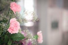 Rosa Blütennahaufnahmephotographie | Schöner Frühlingsflorahintergrund Stockbilder