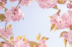 Rosa Blütenrahmen Lizenzfreies Stockfoto