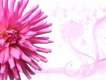 Rosa blom- bakgrund Royaltyfri Foto