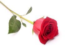 Rosa blomma. arkivbild
