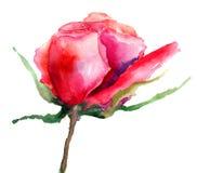 Rosa blomma Royaltyfri Fotografi