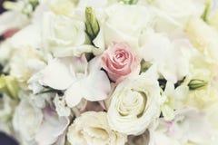 Rosa blomma Arkivbild