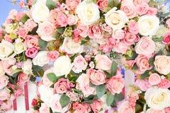 Rosa blomma arkivbilder
