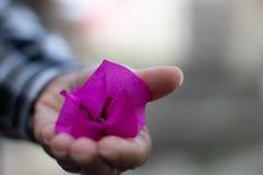 Rosa blomma i en flickahand fotografering för bildbyråer