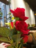 Rosa blomma på kafécoffee shop arkivfoto