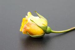 Rosa blommahuvud på svart bakgrund Fotografering för Bildbyråer