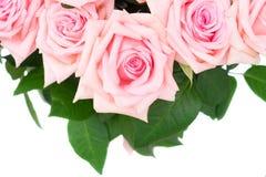 Rosa blommande rosor Arkivfoto