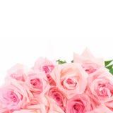 Rosa blommande rosor stock illustrationer