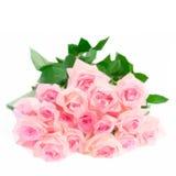 Rosa blommande rosor vektor illustrationer