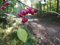 Rosa blommande träd i en skog arkivfoto