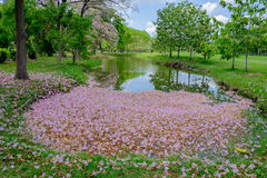 Rosa blommanedgång i träsket Arkivfoton