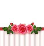 Rosa blommaordning och ram Arkivbild