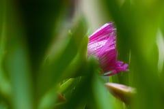 Rosa blommasikt royaltyfria bilder