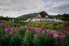 Rosa blommaträdgårdar med templet för Hor khumluang på paviljongen a royaltyfria foton
